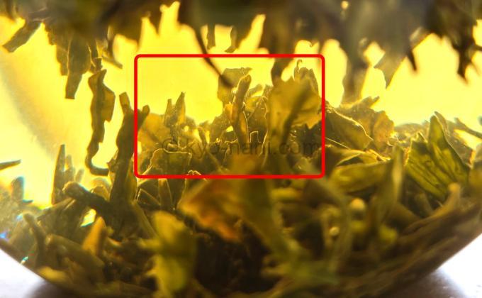 オレンジバレーを淹れた時に見られる毛茸(もうじ)の写真